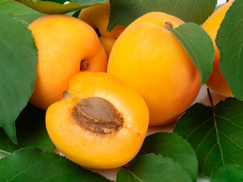 ilerfred-sectores-fruta-verdura-10